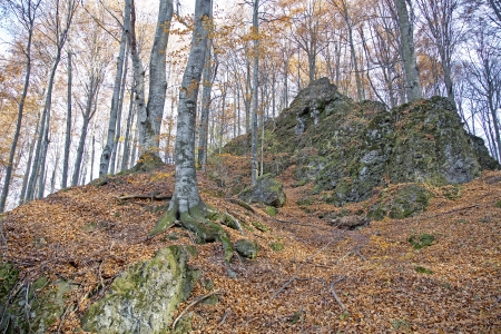 Big rocks in a forest covered with moss Stock Photo - 16944898