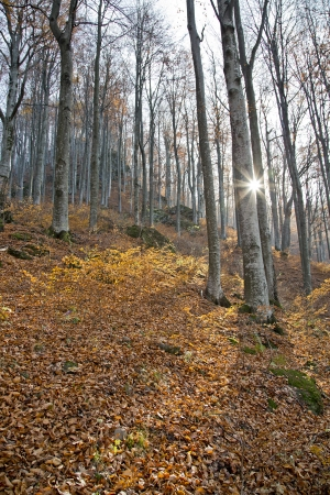 Sunny day in the autumn forest Stock Photo - 16944897