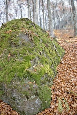 Closeup of a big stone covered with moss Stock Photo - 16944896