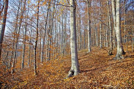 A wood on a sunny autumn day Stock Photo - 16944900