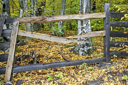 Closeup of a fence next to an autumn forest photo