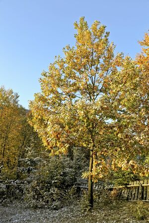 A garden in autumn with big colorful trees Stock Photo - 16959995