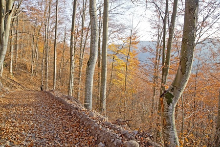 Autumnal forest on a mountain Stock Photo - 17011914