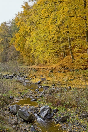 Autumn trees with a little creek in front Stock Photo - 17211907