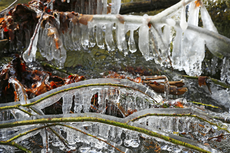 Ice formations on a winter tree.
