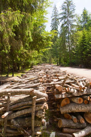 boles: Wood pile in the forest Stock Photo