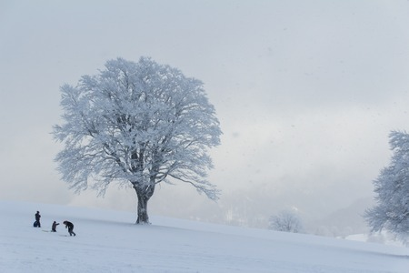 A tree full of snow surrounded by some people in the middle of Black Forest winter wonderland