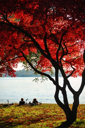 stanley: Cyclists rest underneath the amazing red leaves of a tree in Stanley Park, Vancouver. Stock Photo