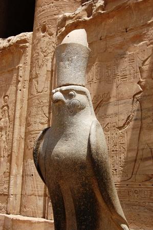 egyptian pharaoh: Horus statue at outside of Edfu Temple in Egypt.