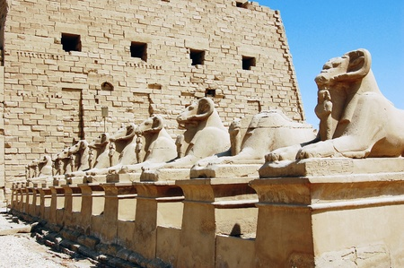 Ram statues at the entrance to Luxor Temple in Egypt. photo