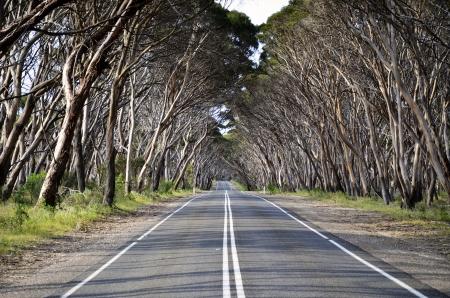 lonely road: Tree lined road on Kangaroo Island, South Australia  Stock Photo