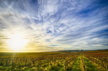 vale: McLaren Vale winnica w późnym popołudniem Zdjęcie Seryjne