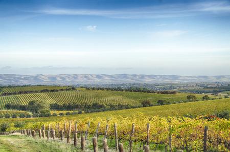 McLaren Vale vineyard and horizon in the afternoon Banco de Imagens