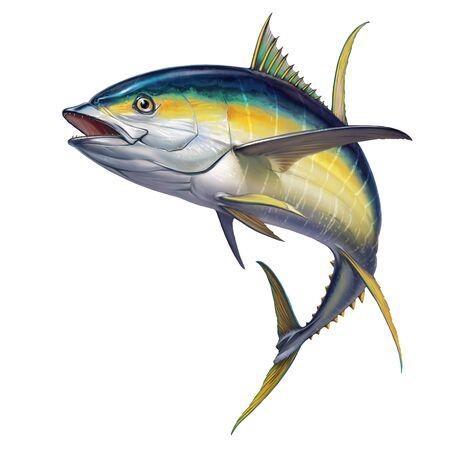 yellow tuna. black fin yellow tuna on white. Realistic isolated illustration.