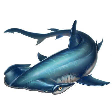 Hammerhead shark on white background illustration 免版税图像