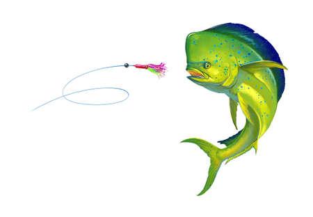 Mahi mahi or dolphin fish on white Bait Sea Octopus Skirt. Realistic illustration of mahi-mahi or dolphin fish on white background isolate. 免版税图像