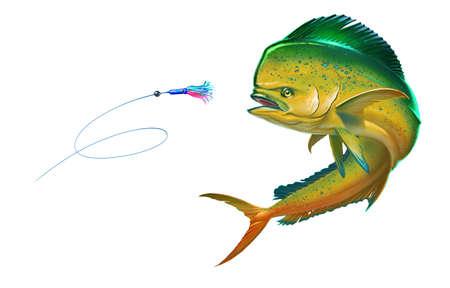 Yellow mahi mahi or dolphin fish attacks bait sea swim squids skirt. Realistic illustration of mahi-mahi or dolphin fish on white background isolate.