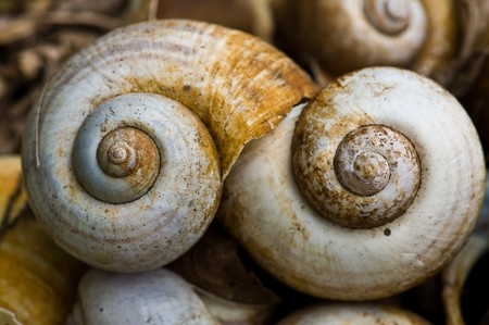 Spiral shells Stock Photo - 7173267