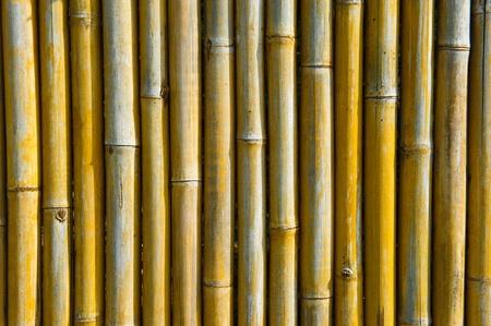 bamboo background Stock Photo - 9614372