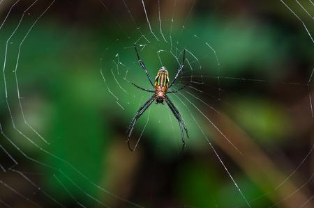 Spider und Web Standard-Bild