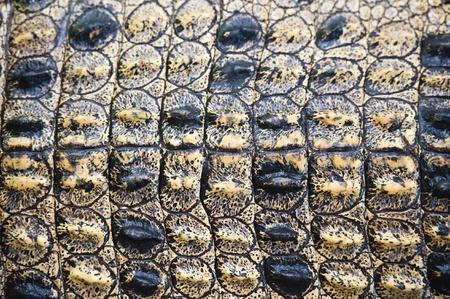 crocodile skin: crocodile skin