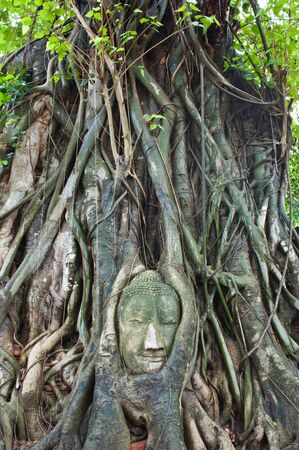Head of Sandstone Buddha in The Tree Roots at Wat Mahathat, Ayutthaya, Thailand Stock Photo - 9938106