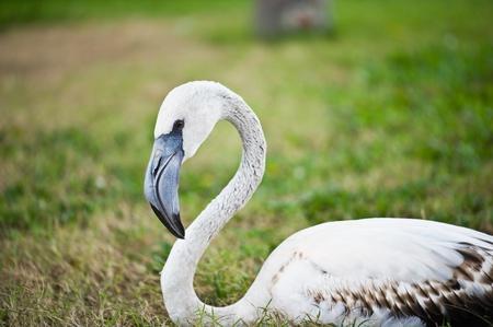 flamingo Stock Photo - 9938350