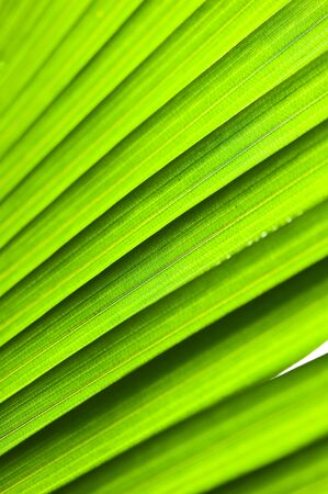 nervure: abstract green leaves background  Foto de archivo
