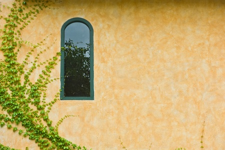 glass window with green leaves photo