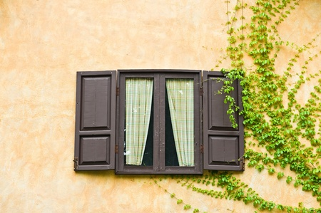 open window with green leaves  photo