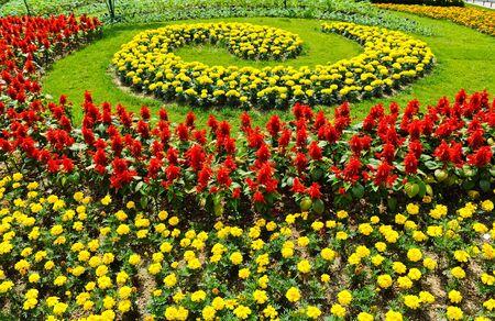 Flower in garden Stock Photo - 10100342