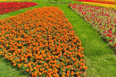 Flower in garden Stock Photo - 10100344