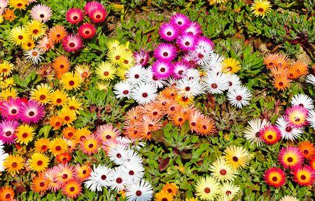 Flower in garden  Stock Photo - 10100330