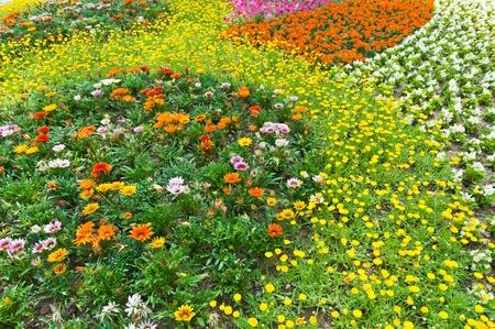 Flower in garden  Stock Photo - 10100341
