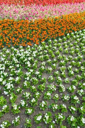 Flower in garden Stock Photo - 10100340
