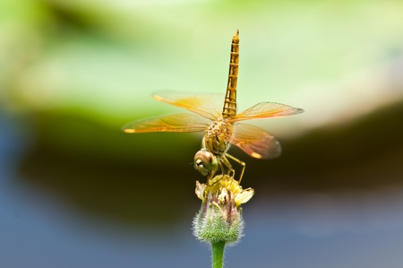 moire: Dragonfly