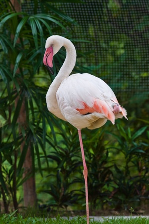 flamingo Stock Photo - 10100402