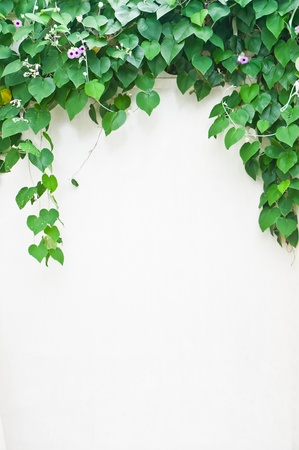 'living organism': green leaves on white wall