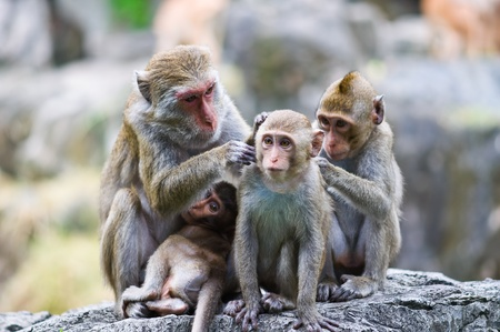 Family of monkeys  Stock Photo