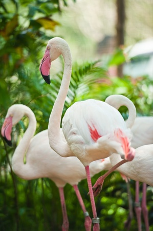 beautiful flamingos  Stock Photo - 10436739