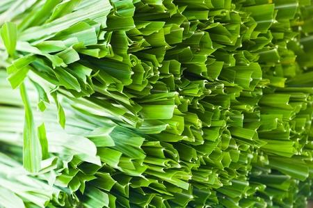pandanus: pandan leaf Stock Photo