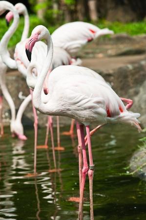 flamingos Stock Photo - 10324343