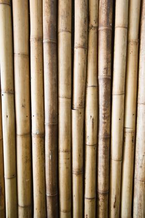 bamboo background Stock Photo - 10436702