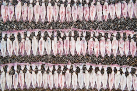 calmar: Squids drying  Stock Photo