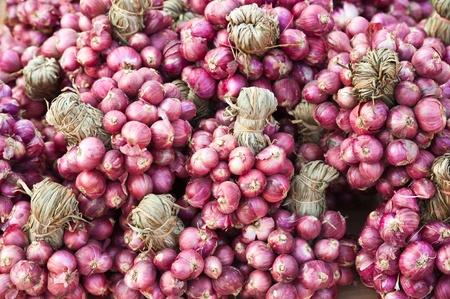 Garlic on the market  photo
