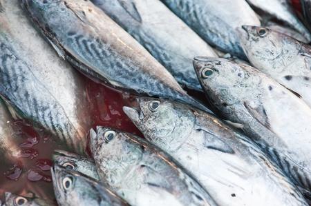 Fresh fish on the market  photo