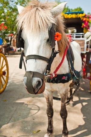 Traditional Horse Carriage, Lampang, Thailand  photo