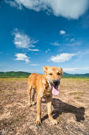 Dog on the hill with blue sky  photo
