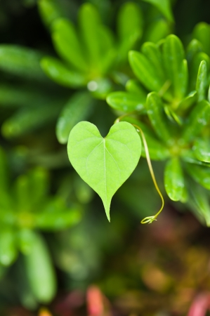 earth day:  Green Heart Leaf