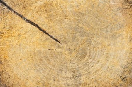 Old cracked wood  photo